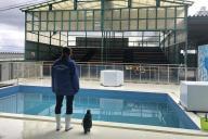 観客のいないアシカショーの会場。ステージ上に立つ飼育員と、人気者のペンギン「出川さん」の後ろ姿が切ない