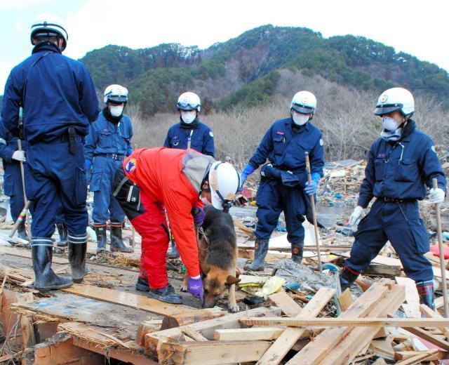 千葉県警の機動隊と協力して生存者を捜索するNPOの救助犬=2011年3月23日、岩手県大槌町