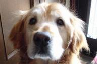 たらればさんのツイッターのアイコンに登場する犬