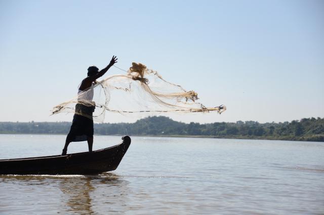 川に網を投げるマウンレイさん。イルカと息を合わせるタイミングは、長年培ったものだといいます=2017年12月、ミャンマー中部