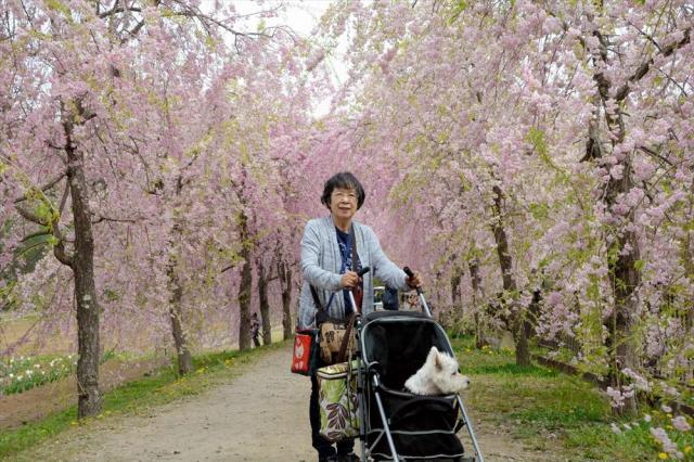 愛犬「小春」と花見に出かけた容子さん=2017年5月、山中湖近くの公園、宮本英司さん提供