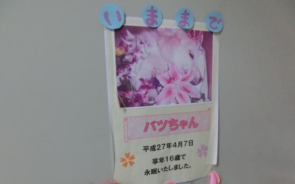 バツちゃんは、2015年に16歳8カ月で亡くなった。今でも動物病院の扉にはその当時の写真が貼られていた=2018年3月29日、愛知県みよし市