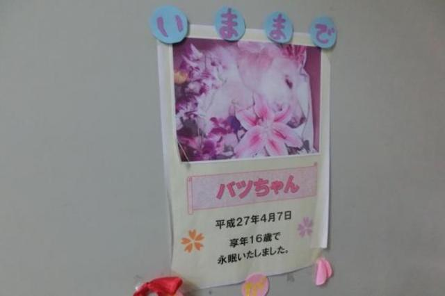 鈴木玉機さんが飼っていたバツは、2015年に16歳8カ月で亡くなった=2018年3月29日、みよし動物病院