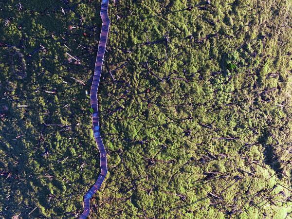 立ち枯れた木々の「白骨林」が広がる正木峠=奈良・三重県境の大台ケ原、細川卓撮影