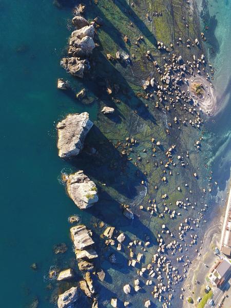 海上に突き出た橋杭岩の奇岩群=和歌山県串本町、細川卓撮影