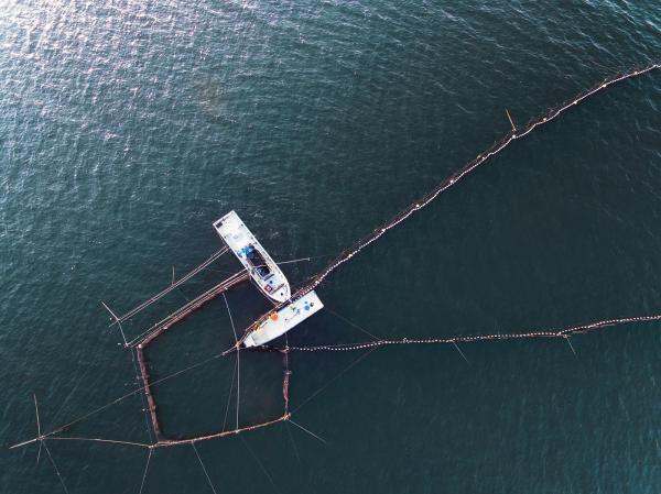 琵琶湖の伝統漁法「エリ漁」=滋賀県大津市、矢木隆晴撮影