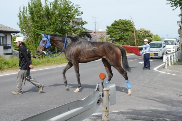 レースを終え、車道を渡る競走馬=岐阜県の笠松競馬場