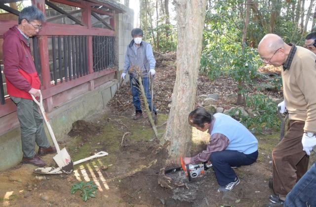 1度目の掘り出しは、そばの木が生育して根を張っているのが分かり、途中で断念=3月4日
