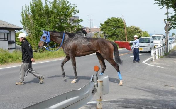 レースを終え、車道を渡る競走馬=岐阜県笠松町