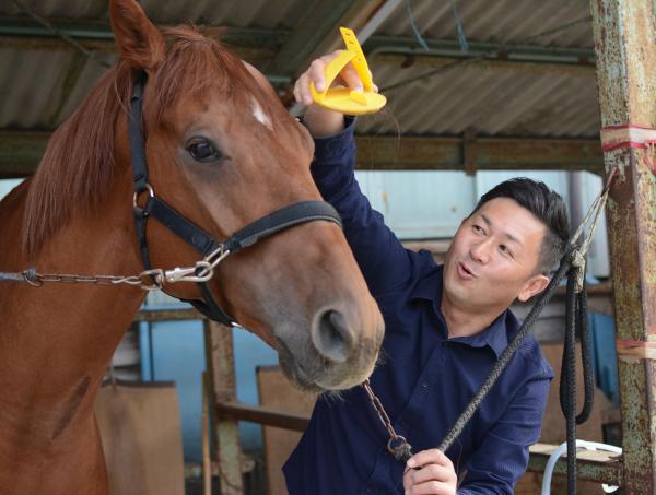 管理馬の世話をする笹野博司調教師=笠松競馬場の厩舎