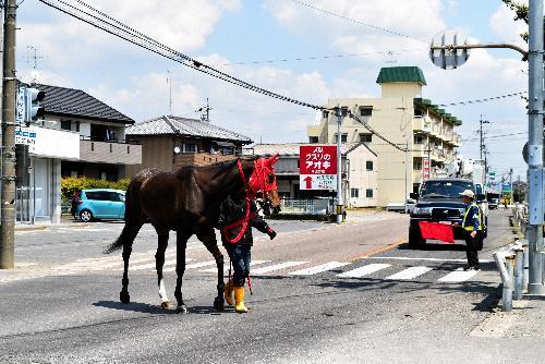 笠松競馬場周辺では競走馬が一般道を歩く珍しい光景がある。警備員が通行車も止める
