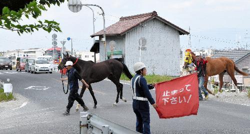 笠松競馬場に向かう競走馬。岐阜県笠松町には馬が一般道を歩く珍しい光景がある。警備員が通行車も止める