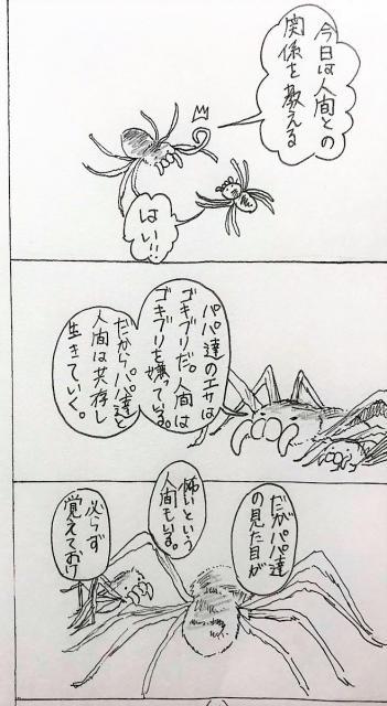 販売 アシダカグモ