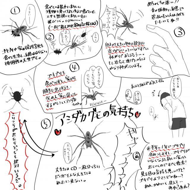 ツイッターで話題のイラスト『アシダカグモの気持ち』。