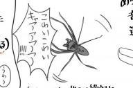 人間から必死で逃げるアシダカグモのイラスト。