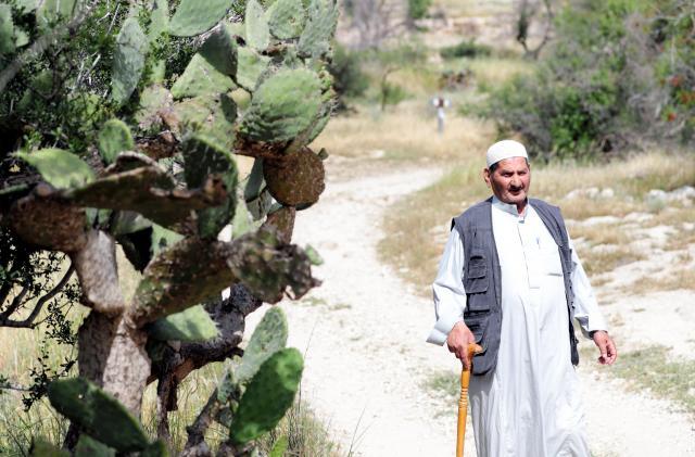 パレスチナ人が伝統的に居住地の周りに植えるサボテンが、村のあちらこちらにありました=2018年4月18日、杉本康弘撮影