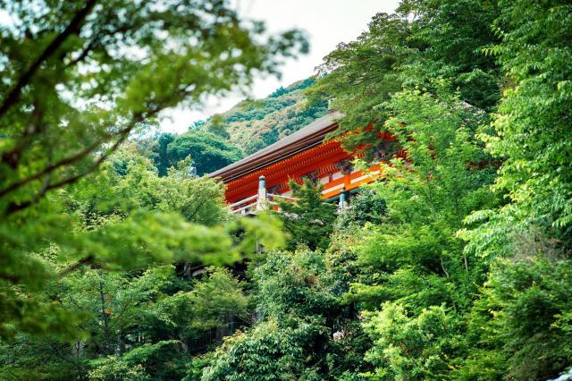 清水寺の新緑=2017年5月、京都市東山区、写真家・須藤和也さん提供