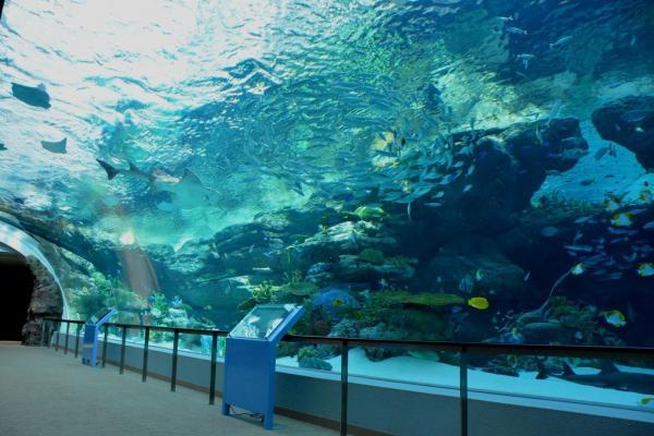 名古屋港水族館の「サンゴ礁大水槽」