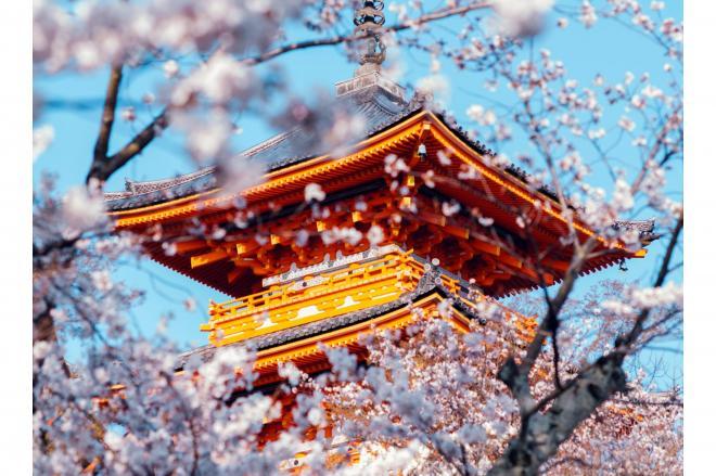 清水寺の満開の桜=2018年3月、京都市東山区、写真家・須藤和也さん撮影