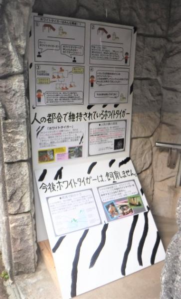 ホワイトタイガーの飼育舎前に設置された説明用の看板。