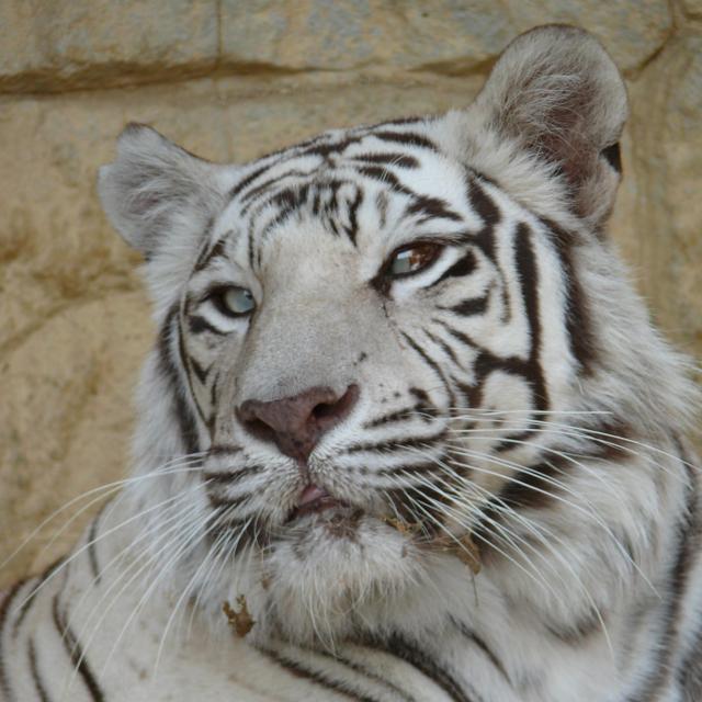 大牟田市動物園で飼育されている「ホワイティ」。