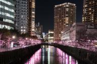 東急池上線五反田駅の真下に流れる目黒川。桜の名所としても知られ、花見の時期はライトアップされる
