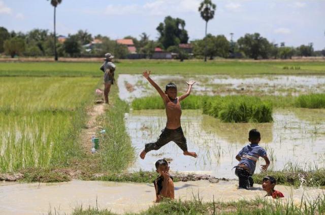 水田で遊ぶカンボジアの子どもたち=ロイター