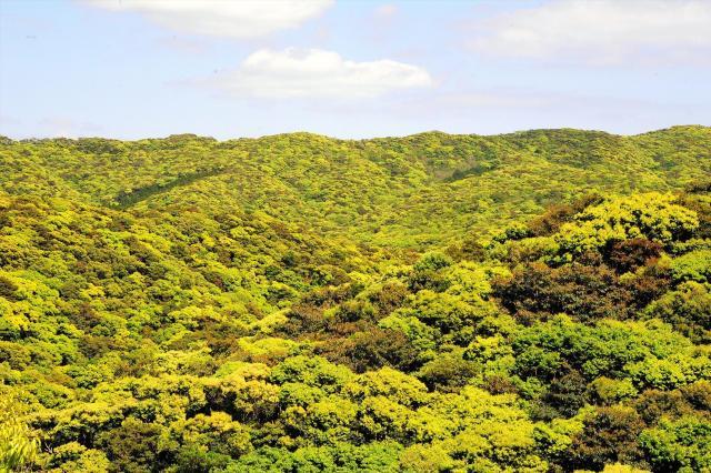 奄美大島の新緑