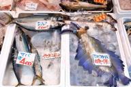 魚売り場にサバなどと一緒に並んだ「アノマロカリス・カナデンシス」