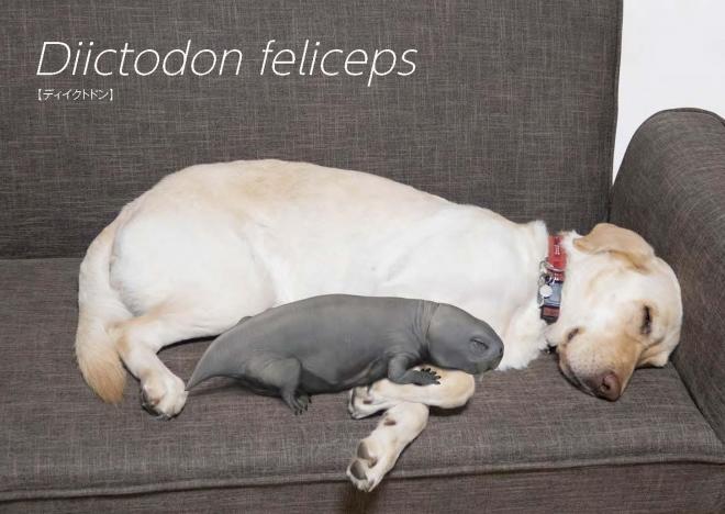 ラブラドールレトリバーと昼寝する「ディイクトドン・フェリケプス」