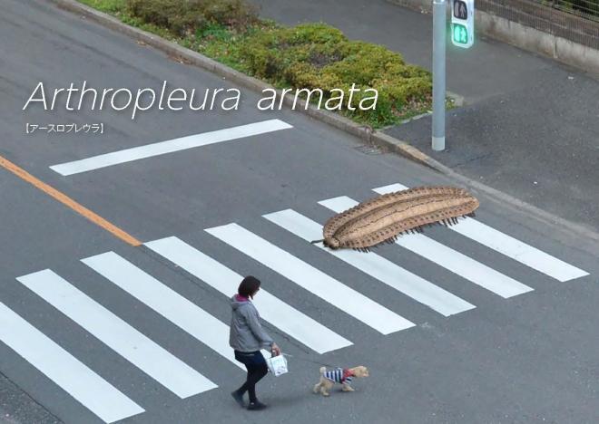横断歩道を渡る「アースロプレウラ・アルマタ」