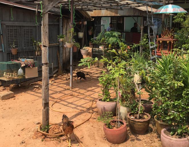 ジャンリー君が通うシアヌークビルの中国語学校。庭には鶏が放し飼いにされていた=2018年2月8日、益満雄一郎撮影