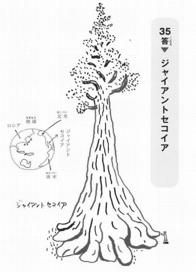 世界一大きな生き物は、木でした