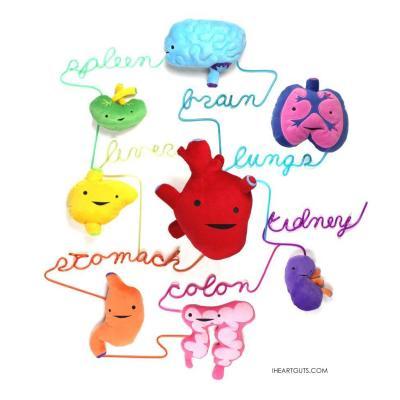 どれがどの臓器かわかりますか?