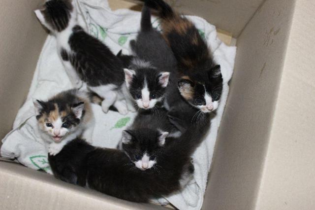 保護された子猫たち=小さないのちを守る会提供