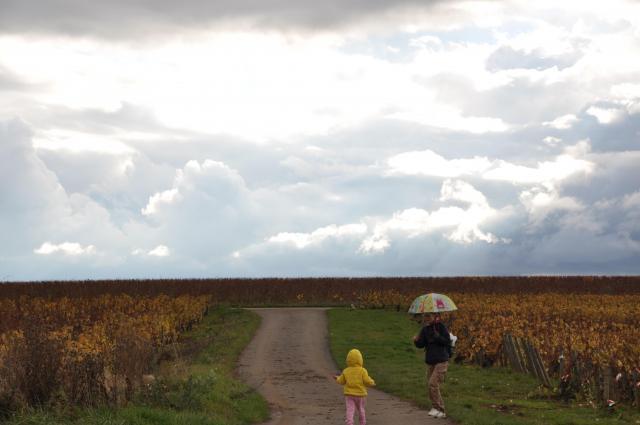 写真は晩秋(11月中旬)に撮影されたもので、すでに収穫を終えていました