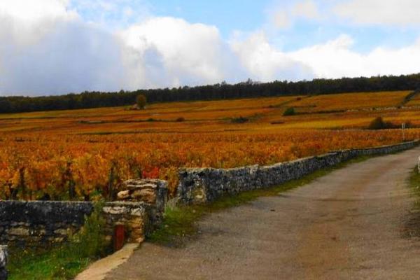 フランス・ブルゴーニュ地方のブドウ畑は「黄金の丘」と呼ばれる