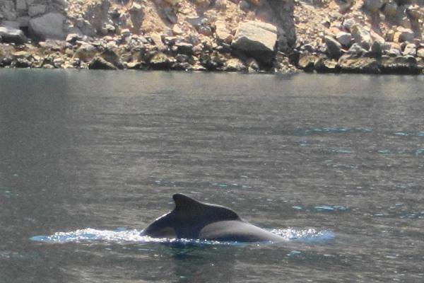 イルカが姿を現した