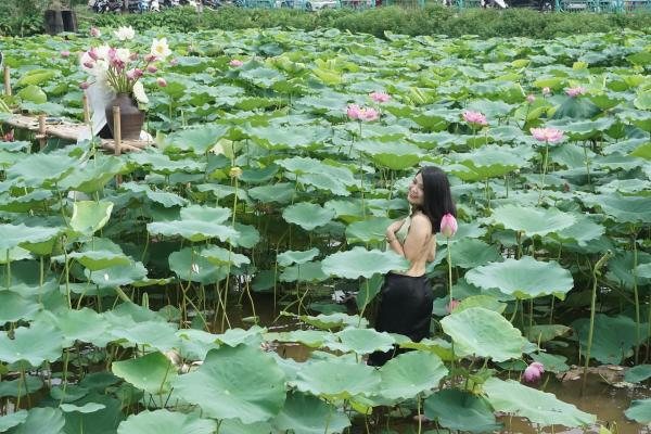 ベトナムでハスの花を背景に写真を撮る女性