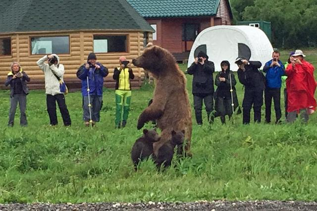 人とクマが接近