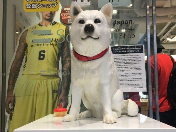 他にも、ソフトバンクの白い犬も撮影していました