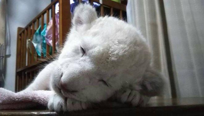 寝顔も可愛いリズム