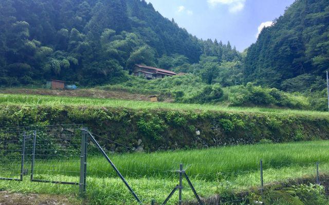 石州犬「石」が生まれた里=2017年7月22日、島根県益田市美都町板井川