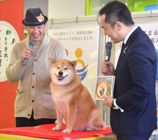 三重県庁を訪ねた柴犬の「まる」