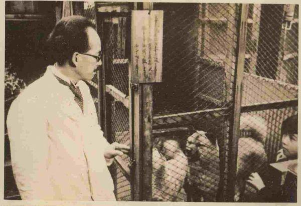 柴犬のルーツとなった石州犬「石」を島根から東京に連れてきた中村鶴吉氏