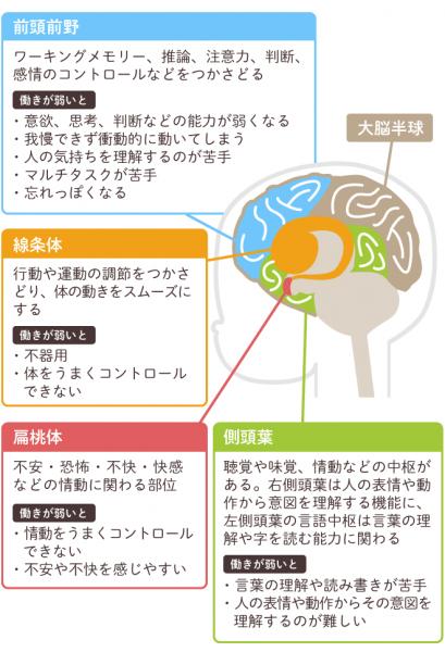 発達障害に関係のある脳の機能