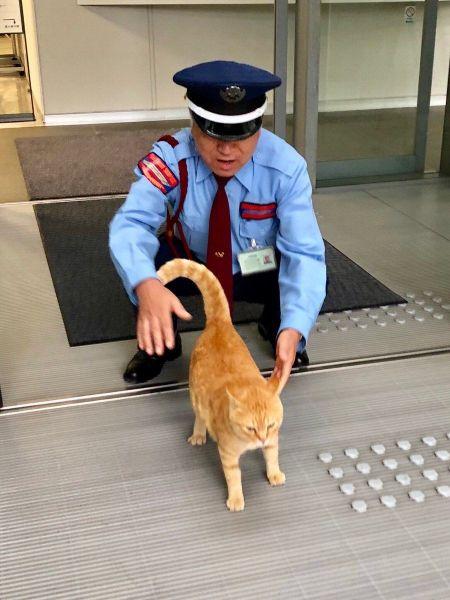 猫と警備員の攻防をとらえた写真