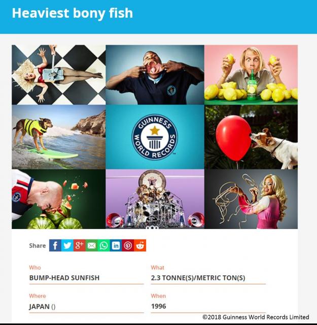 2018年9月に更新されたギネス世界記録「Heaviest bony fish(=世界最重量の硬骨魚)」のページ(2018年11月時点)