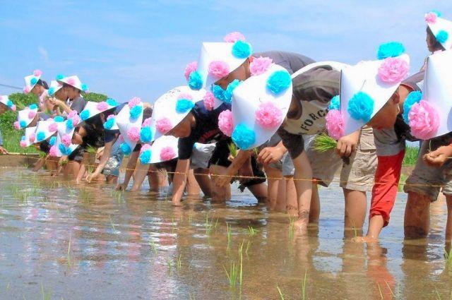 人のおしっこから作られた液体肥料をまいた水田で田植えをする小学生=大分県国東市