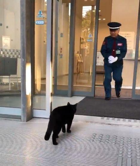 黒猫が侵入を狙っていることに気づいた警備員